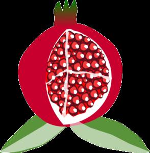 pomegranate illustration grenade fruit